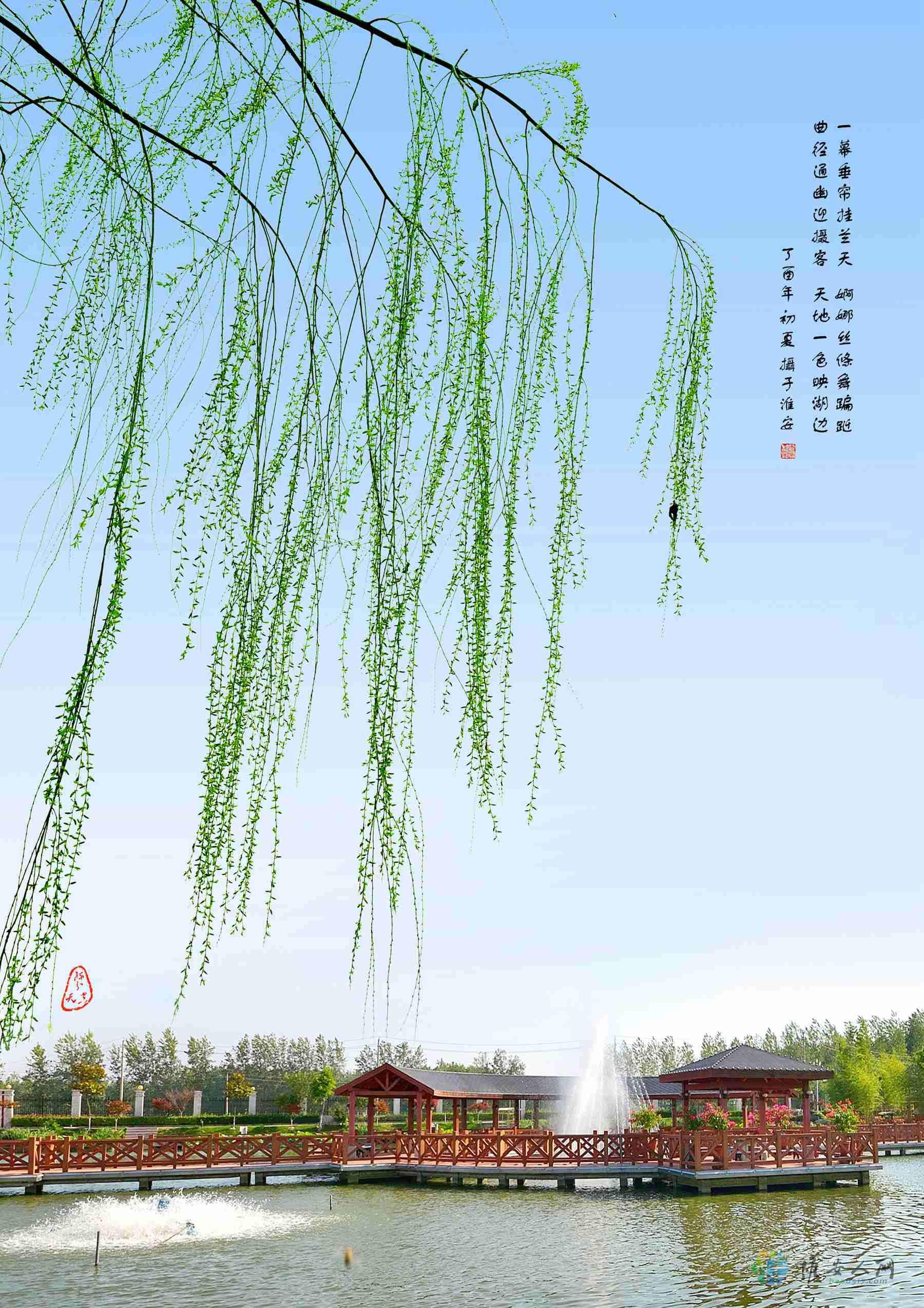 杨柳清风.jpg