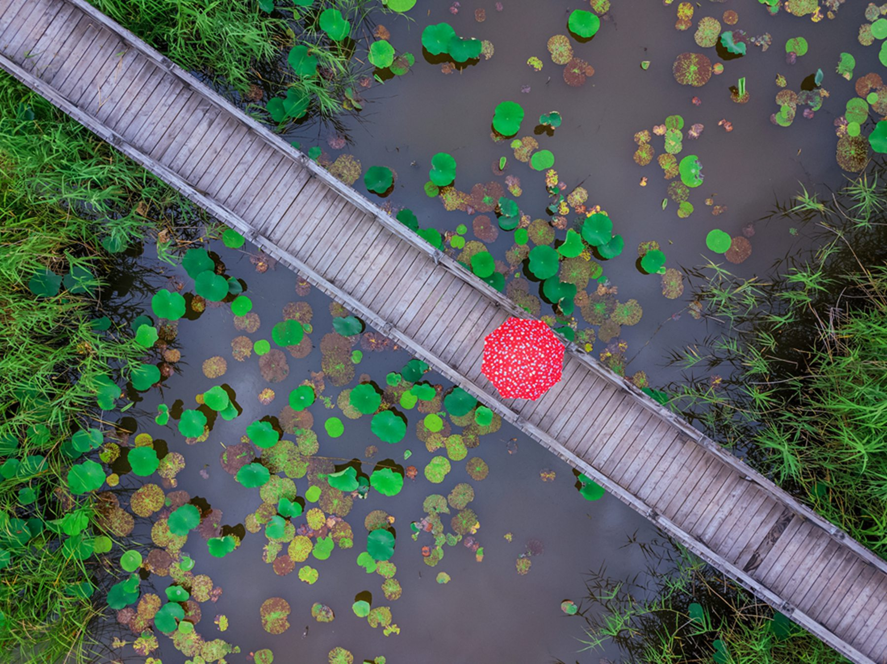 杨默雨后湿地.jpg