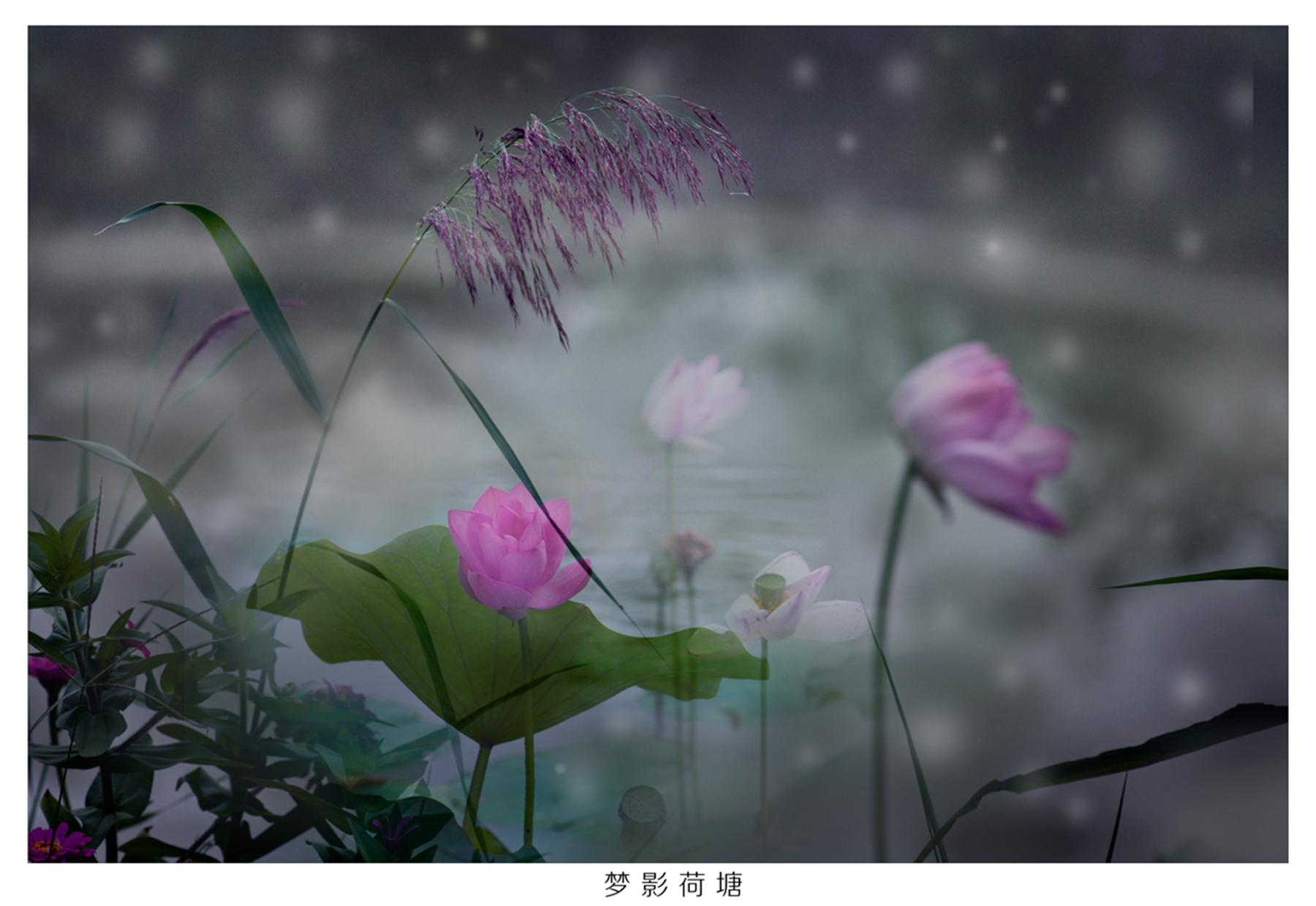 张开阴 梦影荷塘-13805235518 摄.jpg